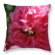 Honey Bee Collecting Pollen On A Pink Rose Throw Pillow