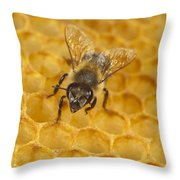Honey Bee Colony On Honeycomb Throw Pillow