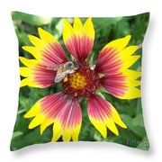 Honey Bee On A Indian Blanket Throw Pillow