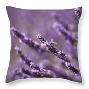Honey Bee In Lavender Throw Pillow
