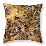 Honey Bee Queen And Colony On Honeycomb Throw Pillow