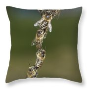 Honey Bees Join To Repair Honeycomb Throw Pillow