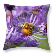 Honeybee And Aster Throw Pillow