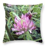 Honeybee Enjoying The Wild Purple Clover Throw Pillow