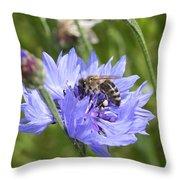 Honeybee In Bachelor's Button Throw Pillow