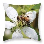 Honeybee On A Blackberry Blossom Throw Pillow