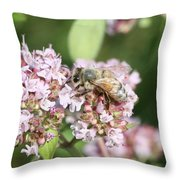 Honeybee On Oregano Throw Pillow