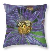 Honeybee On Purple Aster Throw Pillow