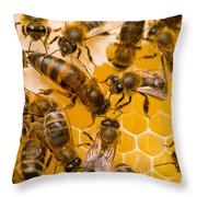 Honeybee Workers And Queen Throw Pillow