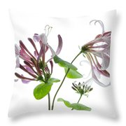 Honeysuckle Blossom Throw Pillow