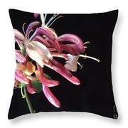 Honeysuckle  Lonicera Throw Pillow