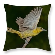 Hooded Oriole Hen At Take Throw Pillow