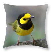 Hooded Warbler - Img_9371-001 Throw Pillow