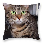 Hoping For A Home Throw Pillow