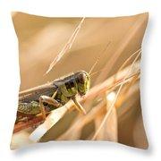 Hopper In Golden Grass Throw Pillow