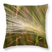 Hordeum Jubatum Grass Throw Pillow