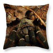 Hornback Baboon Spider Throw Pillow