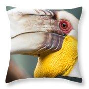 Hornbill Bird Portrait Closeup Throw Pillow