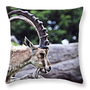 Horned Sheep Throw Pillow