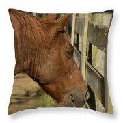 Horse 31 Throw Pillow