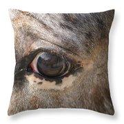 Horse Close Up Throw Pillow