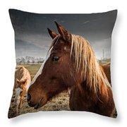 Horse Composition Throw Pillow