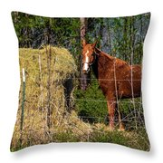 Horse Eating Hay In Eastern Texas Throw Pillow