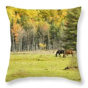 Horse Grazing In Field Autumn Maine Throw Pillow