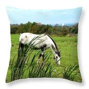Horse Grazing In Field Throw Pillow