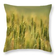 Horse Heaven Wheat Throw Pillow