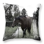 Horse In Europe Throw Pillow