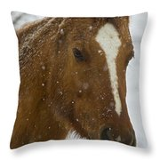 Horse In Snow   #4651 Throw Pillow