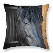 Horse In Stable Throw Pillow