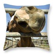 Horse Nose Throw Pillow