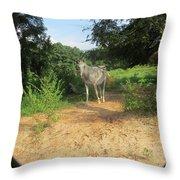 Horse Walks Toward Camera Throw Pillow