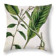 Horseradish Throw Pillow by Elizabeth Blackwell
