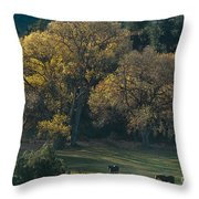 Horses In A Backlit Field With Fall Colored Trees Sedo Throw Pillow