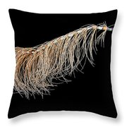 Horsetail On Black Throw Pillow