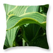 Hosta Leaves After The Rain Throw Pillow