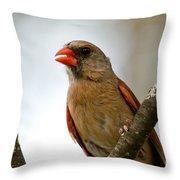 Hot Cardinal Throw Pillow