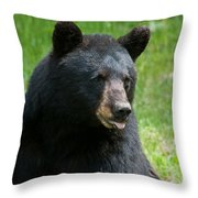 Hot Day In Bear Country Throw Pillow