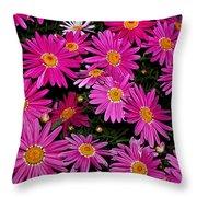 Hot Pink Daisies Throw Pillow
