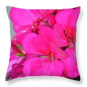 Hot Pink In February Throw Pillow