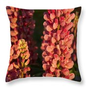 Hot Pink Lupines From My Mother's Garden Throw Pillow