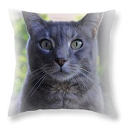 House Cat Stare Throw Pillow