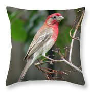 House Finch At Rest Throw Pillow