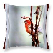 House Finch - Finch 2241-004 Throw Pillow