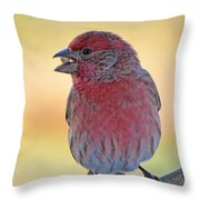 House Finch II Throw Pillow