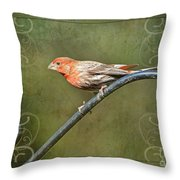 House Finch On Guard II Throw Pillow