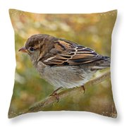 House Sparrow II Throw Pillow